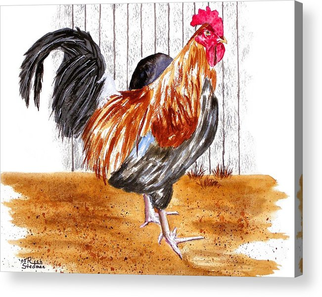 Rooster Acrylic Print featuring the painting King Of The Barnyard by Rich Stedman