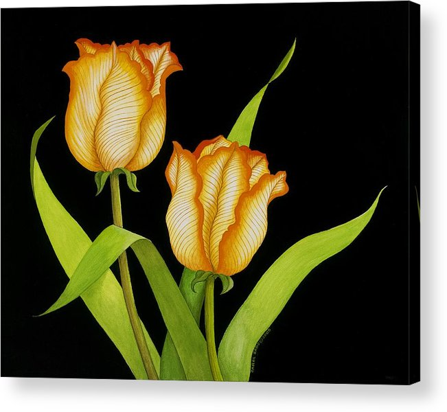 Two Orange-yellow Tulips Posing On A Black Background Acrylic Print featuring the painting Posing Tulips by Carol Sabo