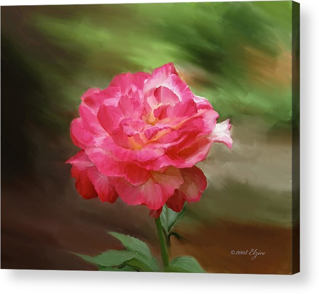 Rose Acrylic Print featuring the painting Rose Alone by Elzire S