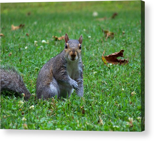 Squirrel Acrylic Print featuring the photograph Squirrel Iv by Jai Johnson