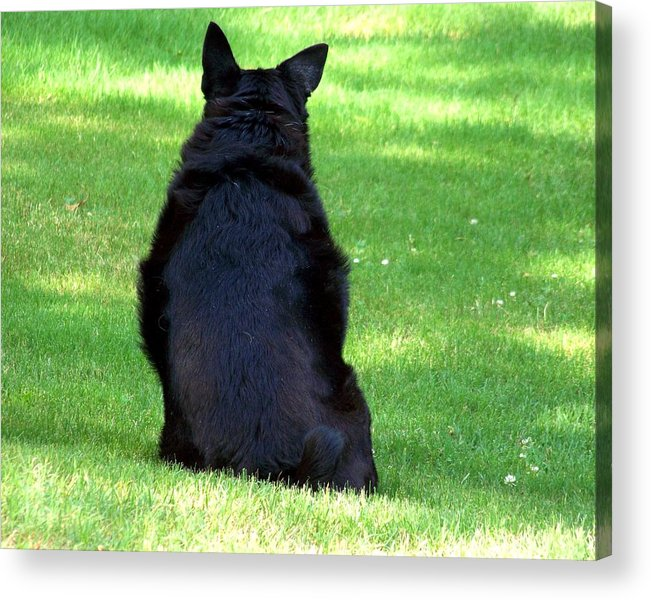 Dog Acrylic Print featuring the photograph Waiting by Jai Johnson