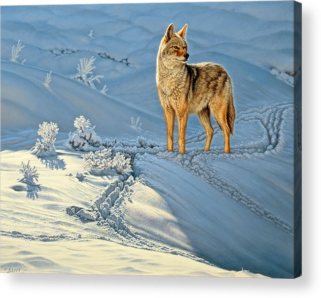 Wildlife Acrylic Print featuring the painting the Coyote - God's Dog by Paul Krapf