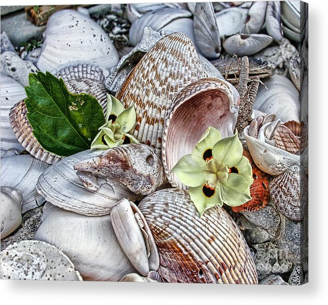 Seashells Seashore Tropical Beach Shells Acrylic Print featuring the photograph Collections by Carolyn Staut