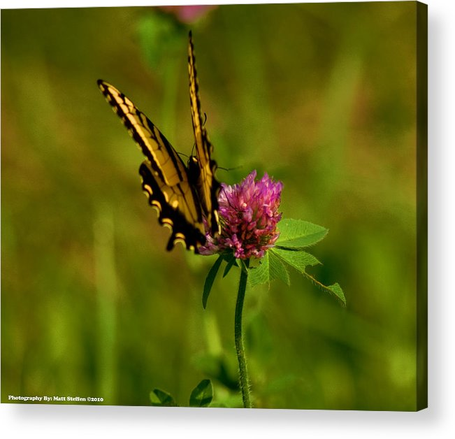 Butterfly Acrylic Print featuring the photograph Yellow Butterfly by Matt Steffen