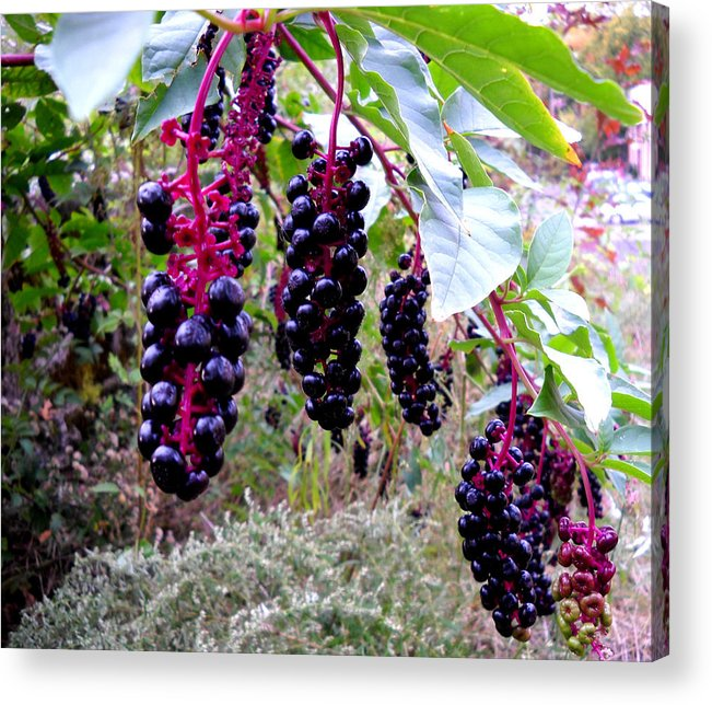 Berry Acrylic Print featuring the glass art Wild Berry by George Griffiths