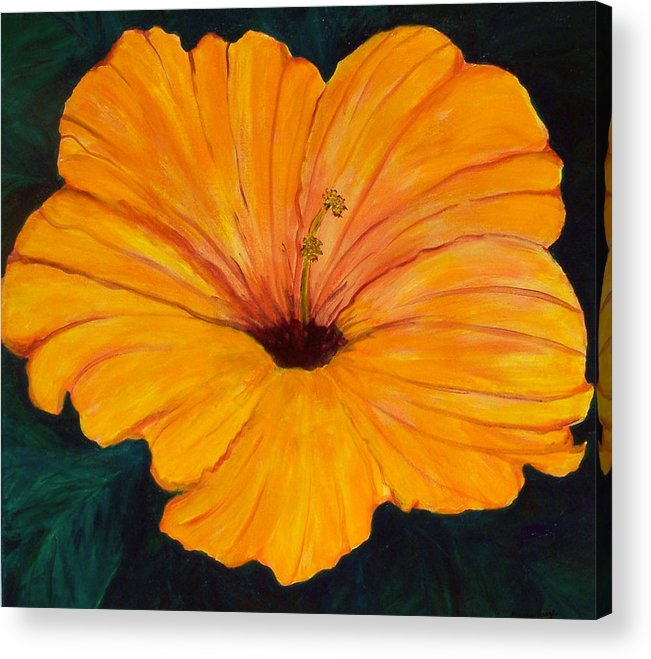 Flowers Acrylic Print featuring the painting Solid Gold by Marcia Paige