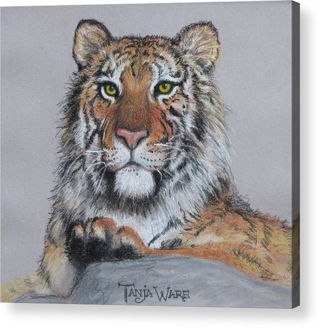 Tiger Acrylic Print featuring the painting Tiger by Tanja Ware