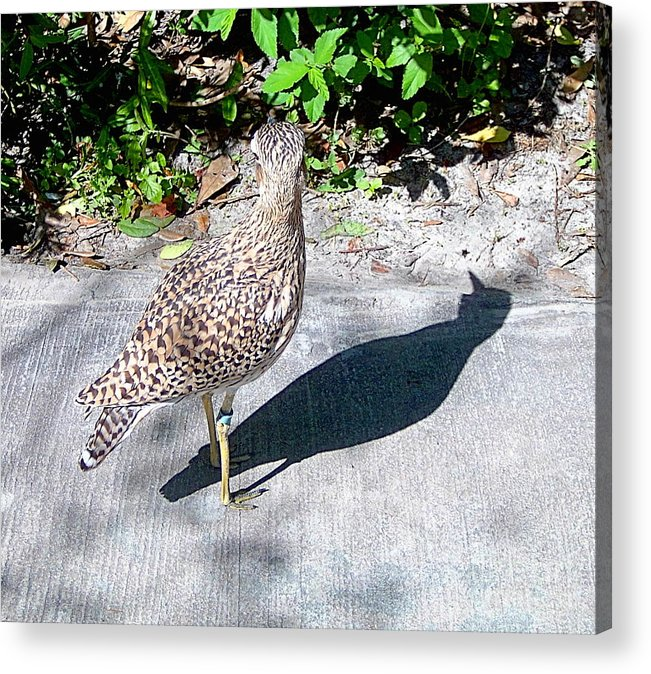 Birds Acrylic Print featuring the photograph Me And My Shadow by Heather Morris