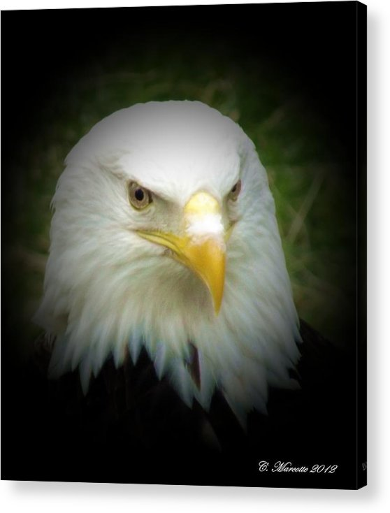 Eagle Acrylic Print featuring the photograph Dignified by Cindy Marcotte