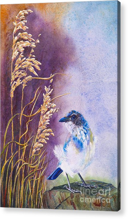 Scrub Jay Acrylic Print featuring the painting Bad Feather Day by Jany Schindler