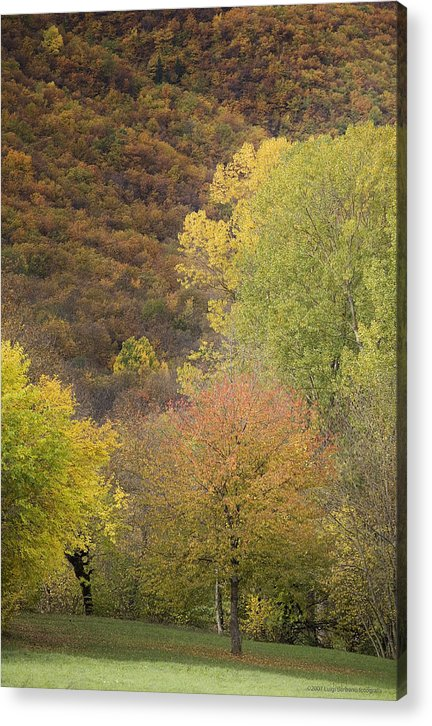 Autumn Acrylic Print featuring the photograph Autumn1 by Luigi Barbano BARBANO LLC