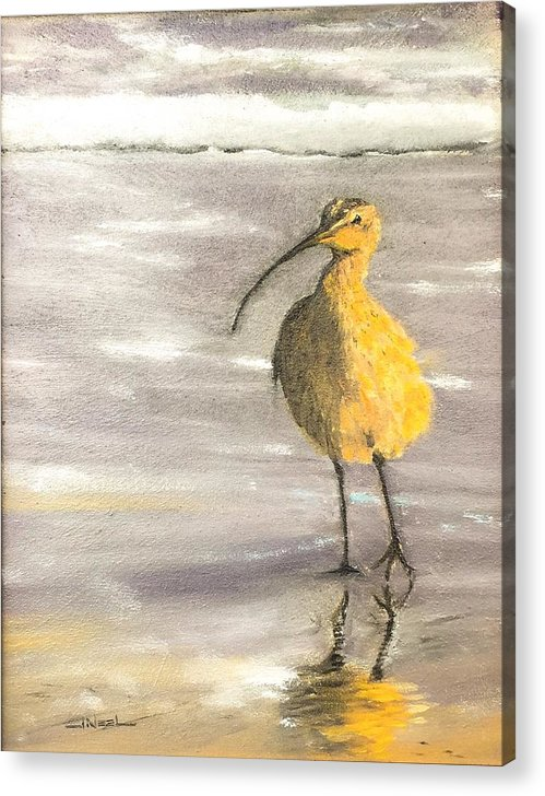 Curlew In Surf Acrylic Print featuring the painting Tippy Toes by Jeffrey Mcdaniel