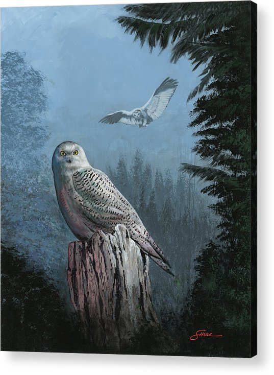 #snowy Owl Acrylic Print featuring the painting Snowy Owl Resting by Harold Shull