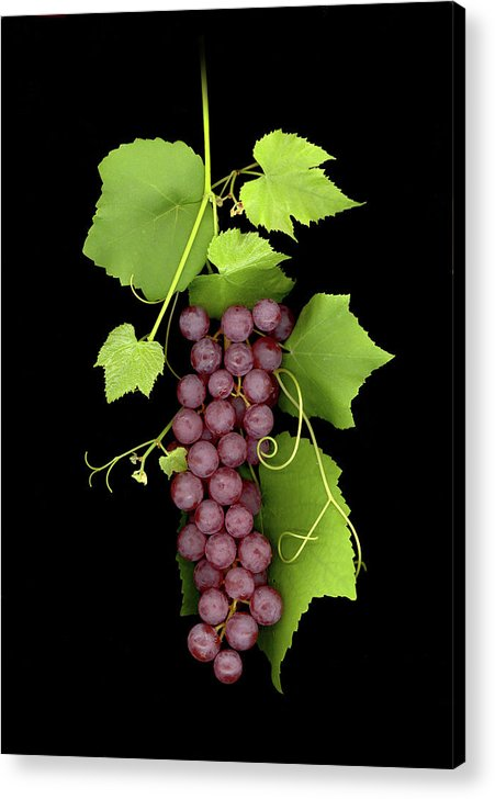 Acrylic Print featuring the photograph Fruit Of The Vine by Sandi F Hutchins