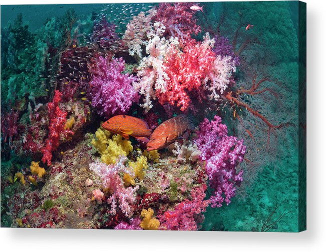 Tranquility Acrylic Print featuring the photograph Coral Reef Scenery by Georgette Douwma
