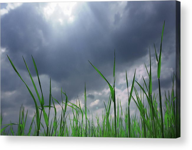 Thunderstorm Acrylic Print featuring the photograph Corn Plant With Thunderstorm Clouds by Silvia Otte