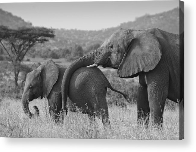 Africa Acrylic Print featuring the photograph Maternal Love by Michele Burgess