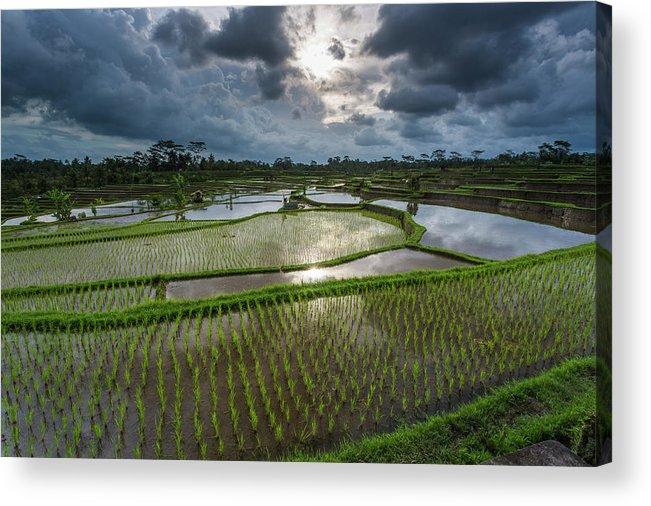 Tranquility Acrylic Print featuring the photograph Rice Terraces In Central Bali Indonesia by Gavriel Jecan