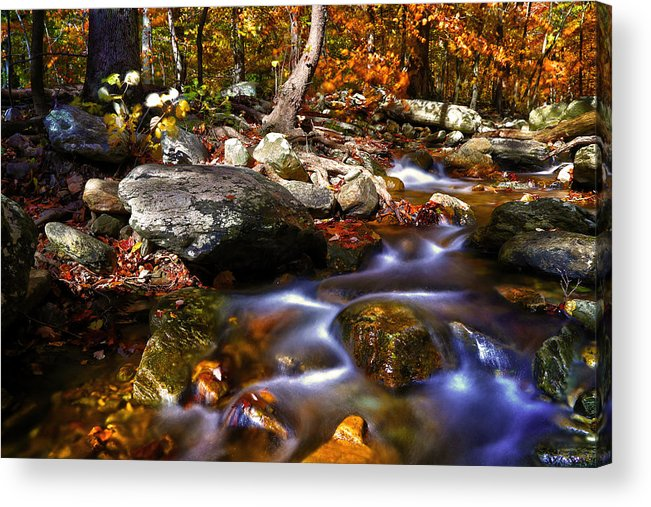 Stream Acrylic Print featuring the photograph The Stream by Mitch Cat