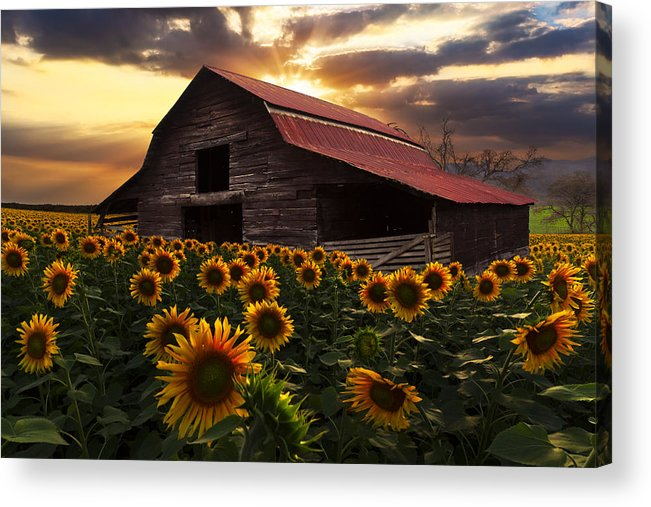 Appalachia Acrylic Print featuring the photograph Sunflower Farm by Debra and Dave Vanderlaan