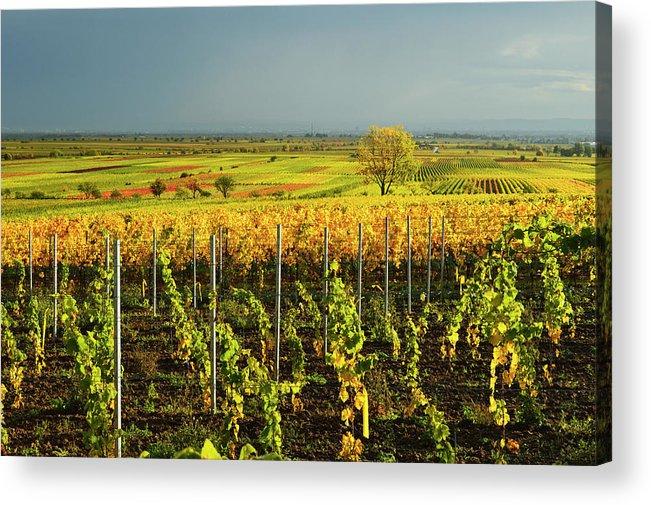 Scenics Acrylic Print featuring the photograph Vineyard Landscape by Jochen Schlenker