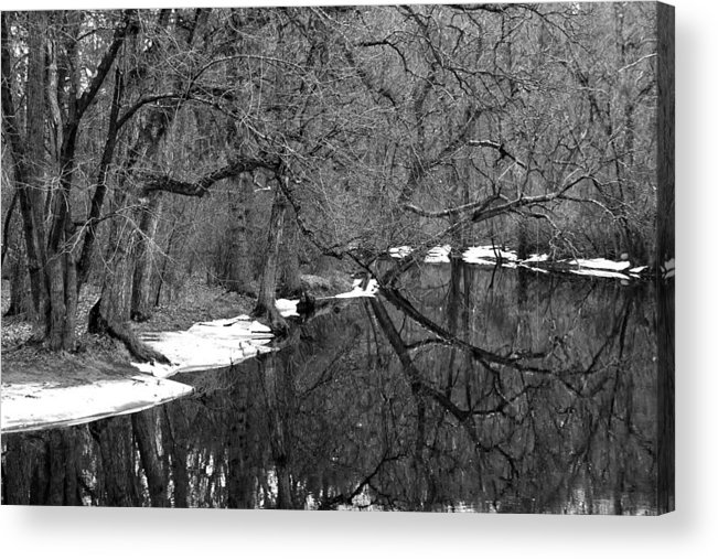 Nature Acrylic Print featuring the photograph Beauty and Imperfection by Mitch Cat