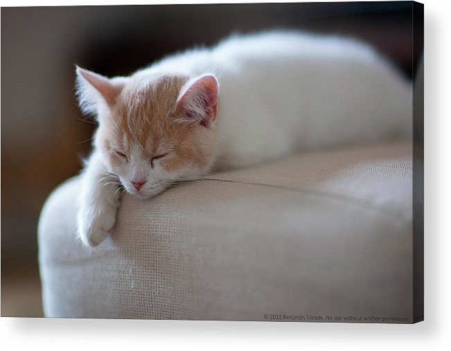 Pets Acrylic Print featuring the photograph Beige And White Kitten Sleeping On by Benjamin Torode