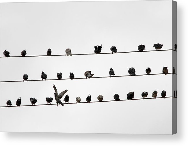 Amazon Rainforest Acrylic Print featuring the photograph Birds Pattern by Ricardo Lima