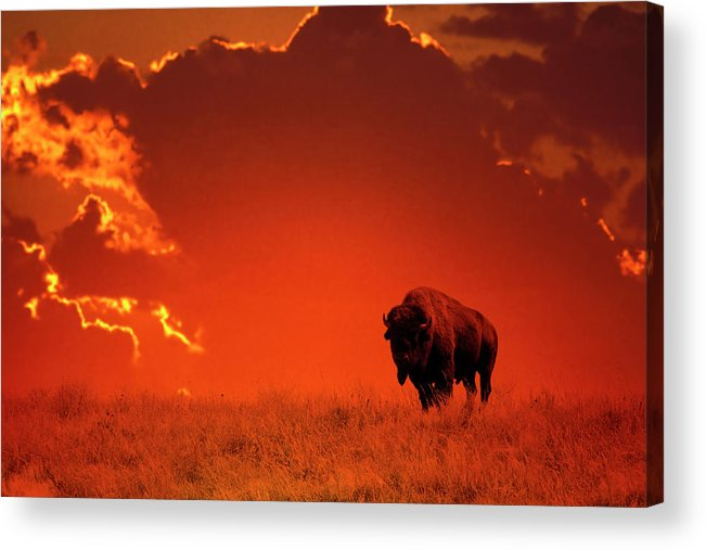 Scenics Acrylic Print featuring the photograph Bison At Sunset by Mark Newman