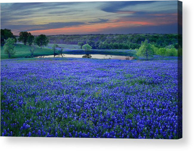 Texas Bluebonnets Acrylic Print featuring the photograph Bluebonnet Lake Vista Texas Sunset - Wildflowers landscape flowers pond by Jon Holiday