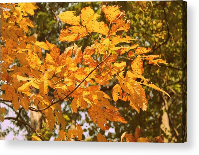 Leaves Acrylic Print featuring the photograph Change is Good by Candice Trimble