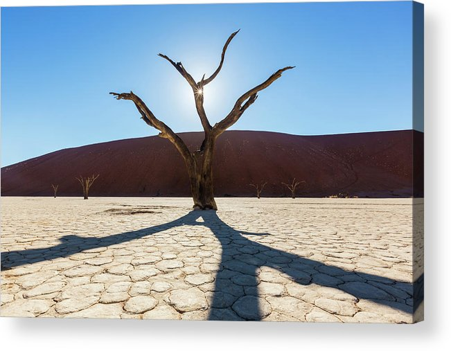 Scenics Acrylic Print featuring the photograph Dead Trees At Dead Valei by Jeremy Woodhouse