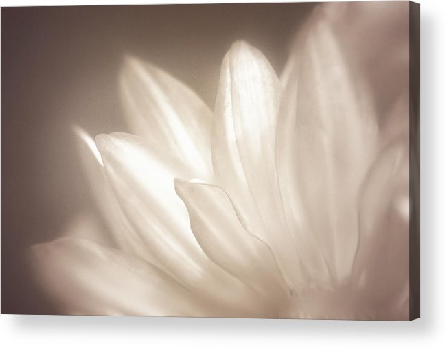 Bloom Acrylic Print featuring the photograph Delicate by Scott Norris