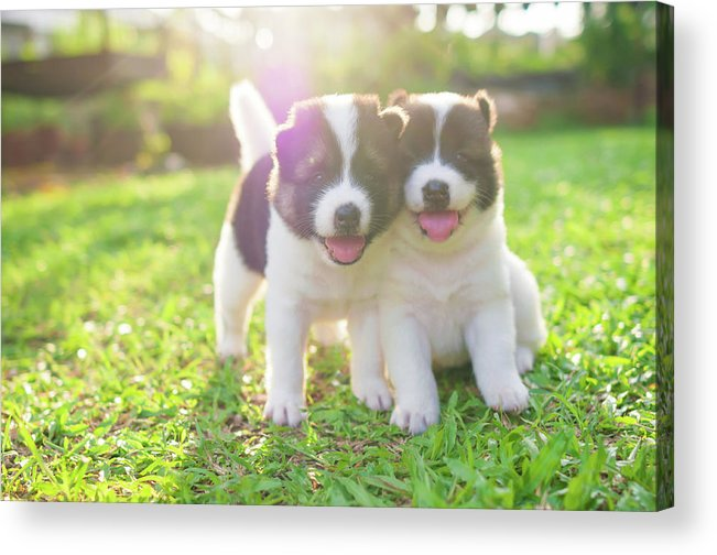 Pets Acrylic Print featuring the photograph Dog And Puppies by Primeimages
