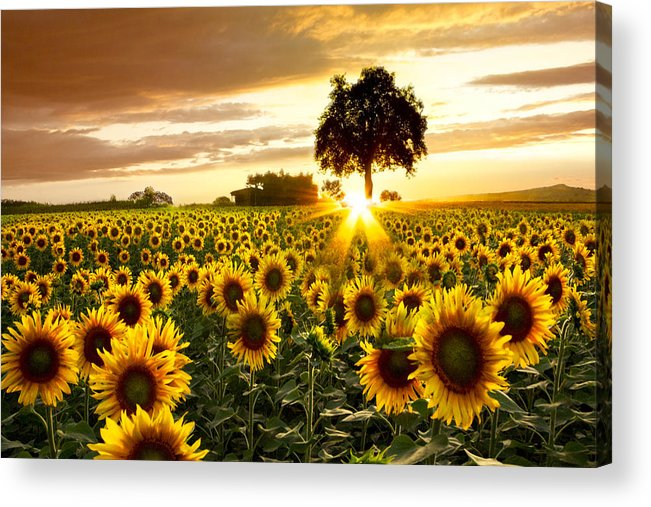 Appalachia Acrylic Print featuring the photograph Fields of Gold by Debra and Dave Vanderlaan