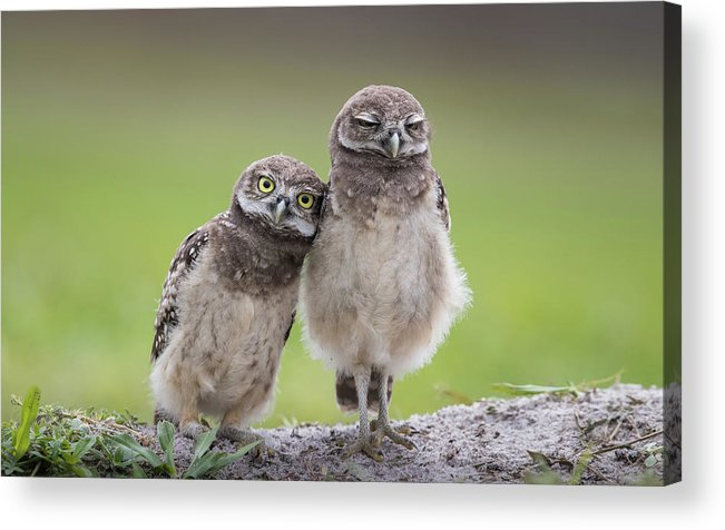 Wildlife Acrylic Print featuring the photograph Friends by Greg Barsh