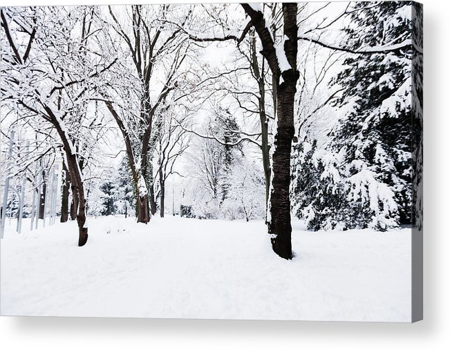 Snow Acrylic Print featuring the photograph Frozen Tree On A Snow Field by Lightkey
