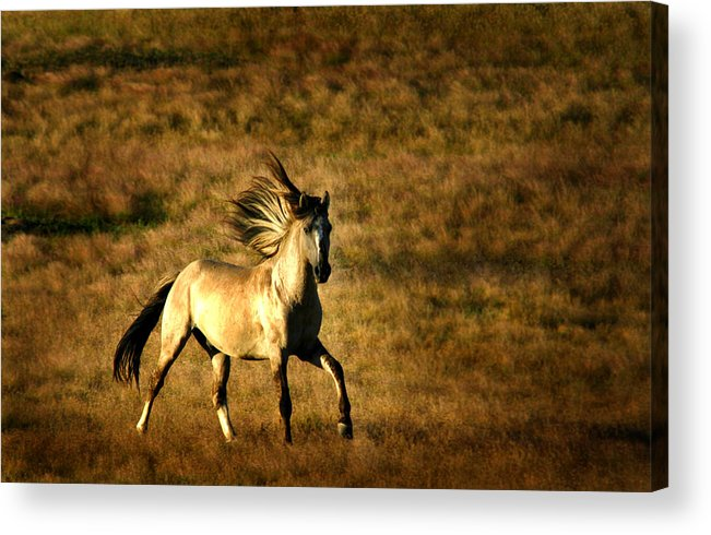 Grey Eagle Acrylic Print featuring the photograph Grey Eagle by Lourie Zipf