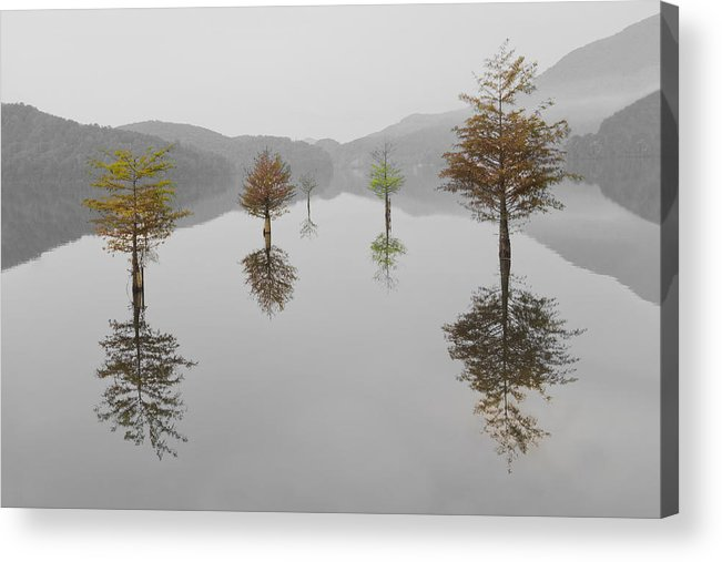 Appalachia Acrylic Print featuring the photograph Hanging Garden by Debra and Dave Vanderlaan