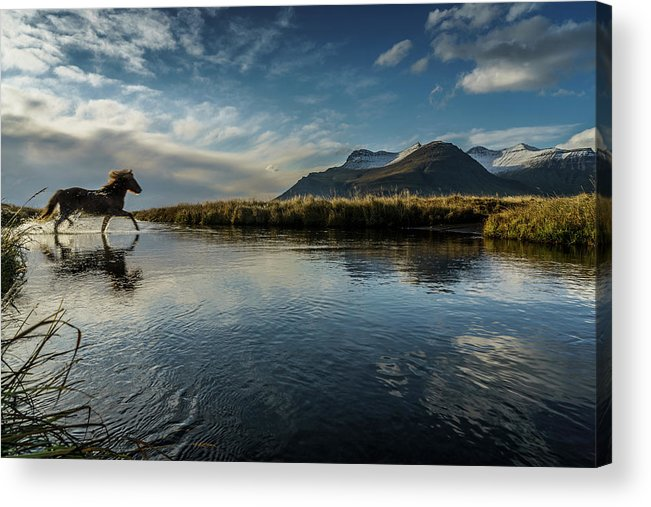 Majestic Acrylic Print featuring the photograph Horse Crossing A River, Iceland by Arctic-images