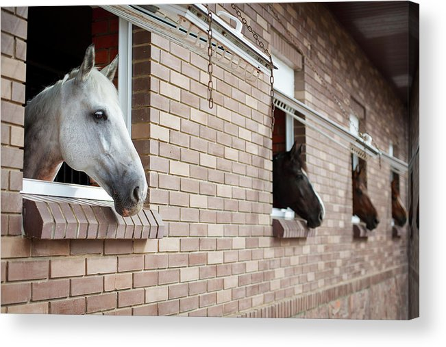 Horse Acrylic Print featuring the photograph Horses Looking From The Windows Of A by O sa