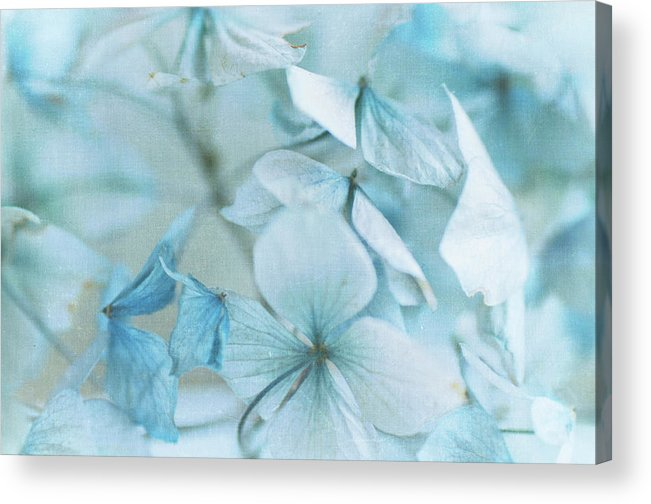 Petal Acrylic Print featuring the photograph Hydrangea Flowers by Jill Ferry