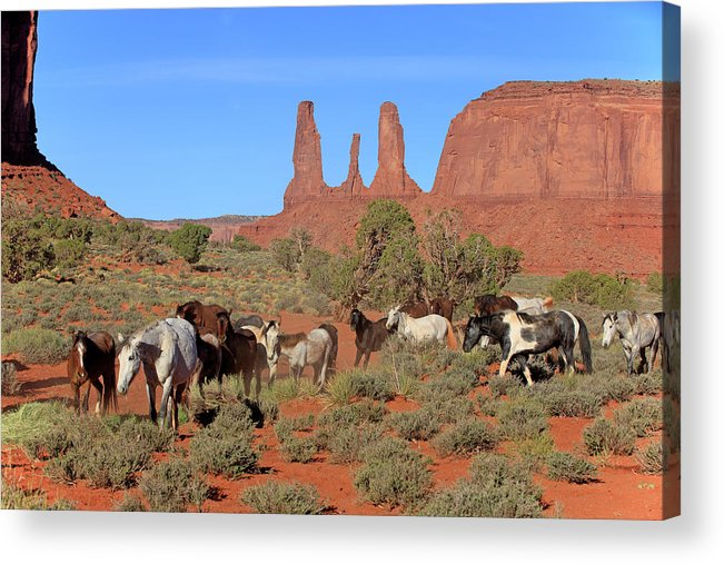 Scenics Acrylic Print featuring the photograph Mustang by Tier Und Naturfotografie J Und C Sohns