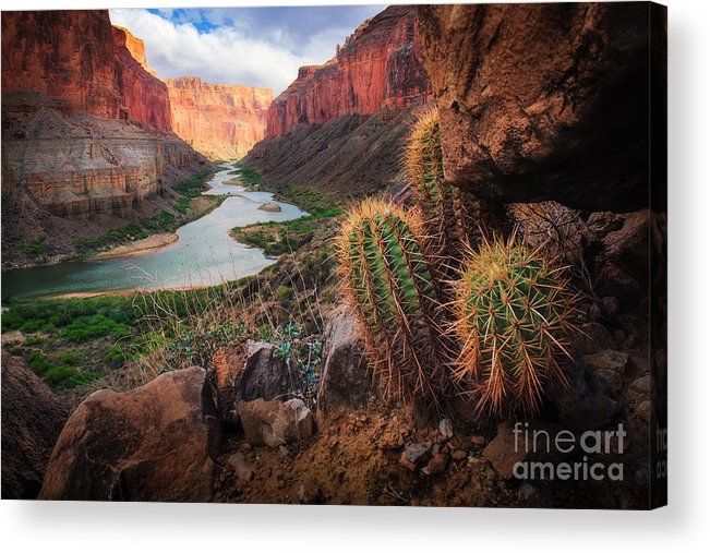 America Acrylic Print featuring the photograph Nankoweap Cactus by Inge Johnsson
