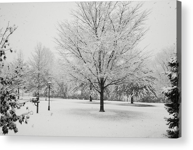Snow Acrylic Print featuring the photograph November Snow by Jean Macaluso