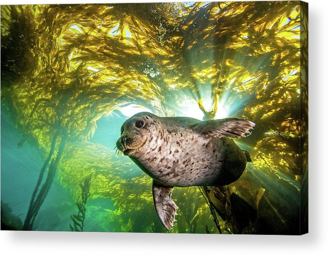 Underwater Acrylic Print featuring the photograph Out Of The Sun by Douglas Klug