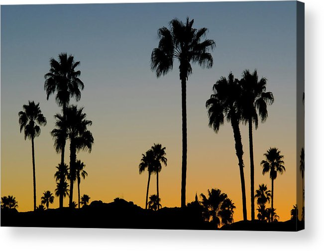 Scenics Acrylic Print featuring the photograph Palm Trees At Sunset by Chapin31
