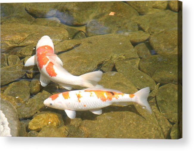 Fish Acrylic Print featuring the photograph Partners by Dervent Wiltshire