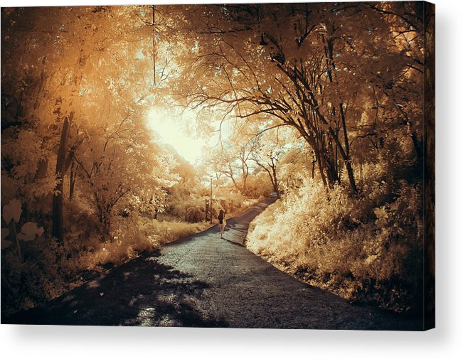 Shadow Acrylic Print featuring the photograph Pathway To Wonderland by D3sign