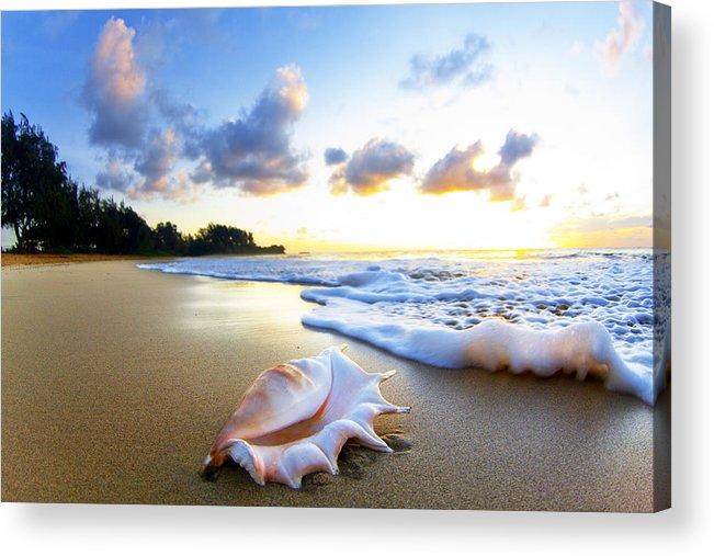 Shell Acrylic Print featuring the photograph Peaches n' Cream by Sean Davey